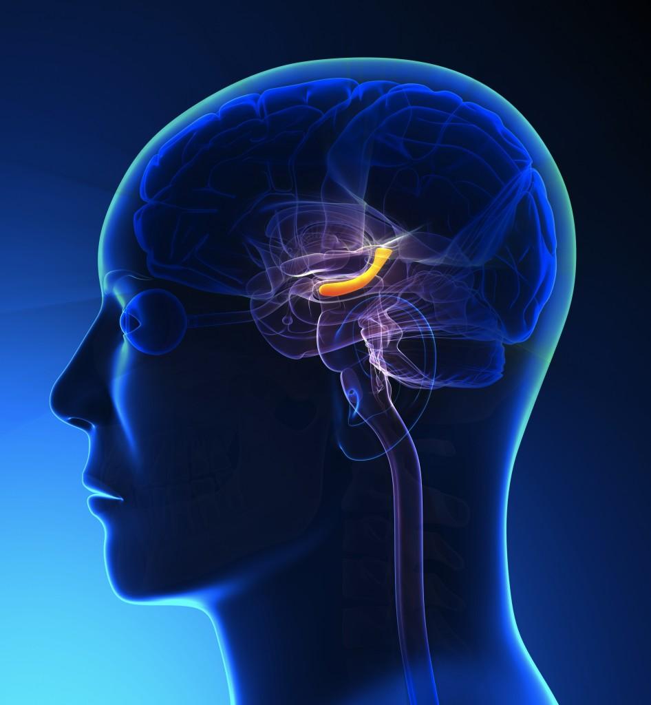 Male Hippocampus Brain Anatomy - blue concept - The Chiari ...